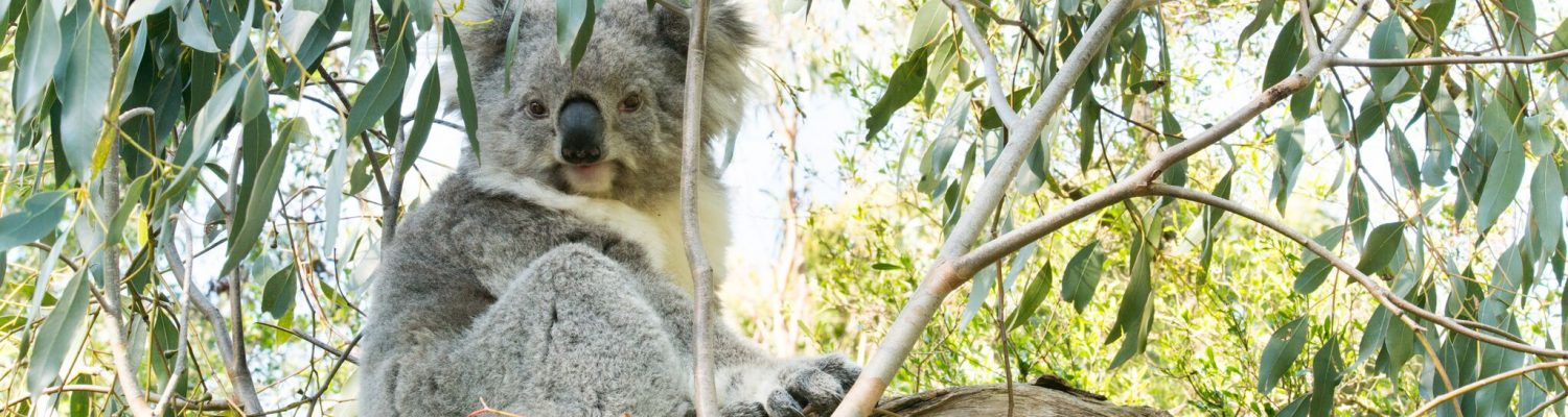 Where to see Australian Animals near Melbourne