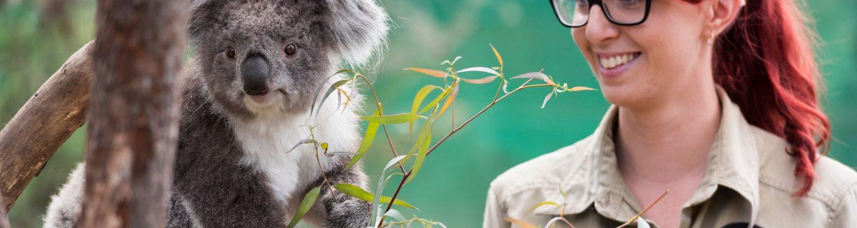Moonlit Animal Spotlight: Koala