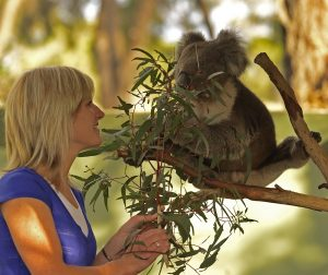 Moonlit Sanctuary Koala Encounter